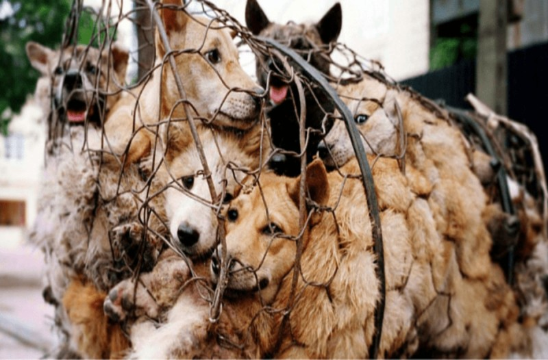 Κίνα: Πόλη απαγορεύει την κατανάλωση κρέατος από γάτες και σκύλους για πρώτη φορά