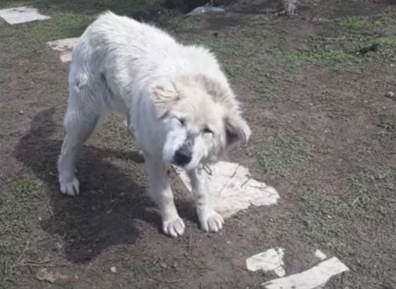 σκύλος υιοθεσία