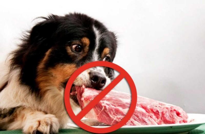 Προσοχή: Αυτές είναι οι 7 τροφές - θάνατος για τα σκυλιά