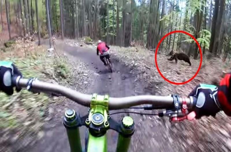 Αγριεμένη αρκούδα κυνηγάει ένα ποδηλάτη - Το βίντεο από την κρυφή κάμερα θα σας σοκάρει