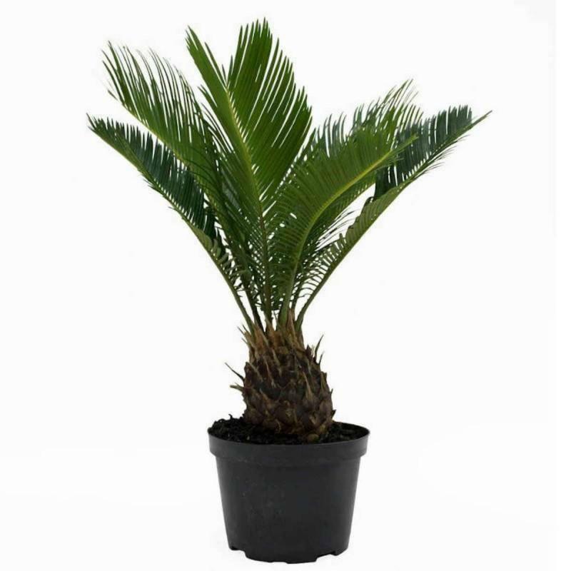 επικίνδυνα φυτά