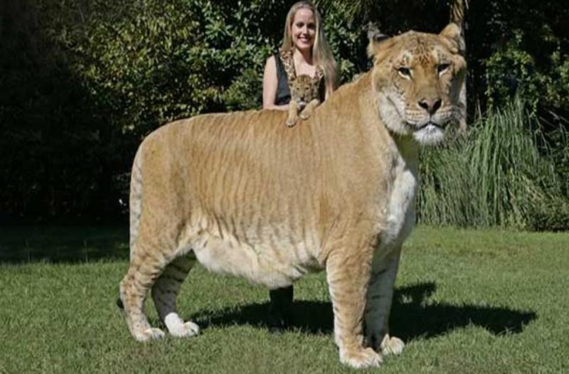 Λιοντάρι ή τίγρης; Η φωτογραφία που έχει τρελάνει τους πάντες - Δεν φαντάζεστε τι είναι