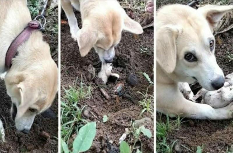 3χρονη σκυλίτσα ξεθάβει και προσπαθεί να αναστήσει το νεκρό σκυλάκι της - Θα «λυγίσετε» (Video)