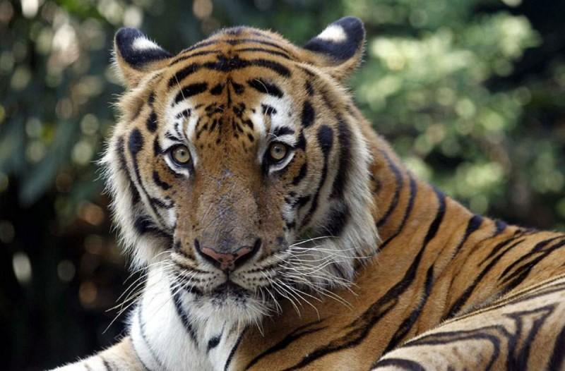 Αυτός ο άντρας βρήκε μέσα σε ένα σπίτι μια τίγρη και κάλεσε την αστυνομία - Η απάντηση που πήρε θα σας αφήσει άναυδους