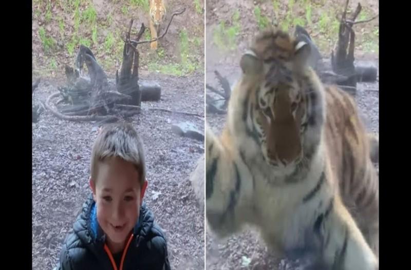 Αυτή η τίγρης κάνει επίθεση σε παιδάκι μέσα στο ζωολογικό κήπο - Κόβει την ανάσα το βίντεο