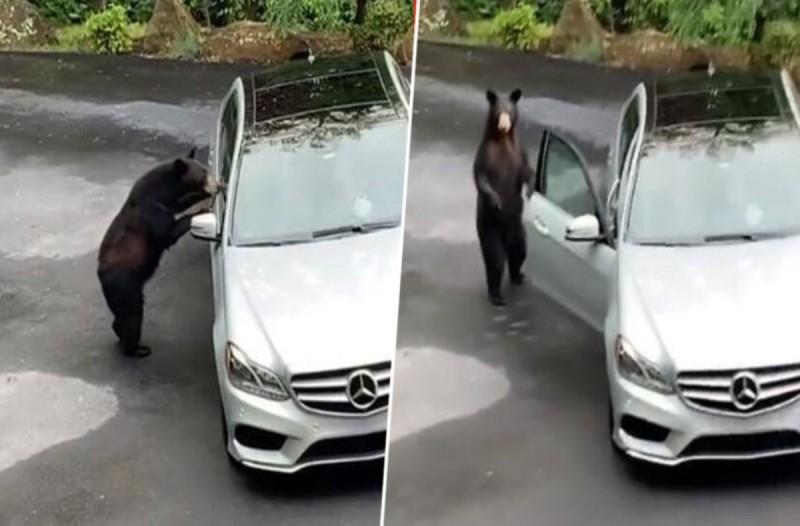 Αρκούδα πλησιάζει και ανοίγει την πόρτα του αυτοκινήτου - Η συνέχεια θα σας εκπλήξει