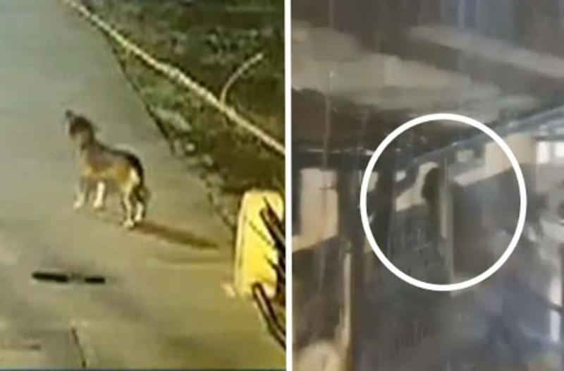 Αδέσποτος σκύλος ειδοποίησε την αστυνομία - Μόλις δείτε το βίντεο από την κάμερα θα μείνετε