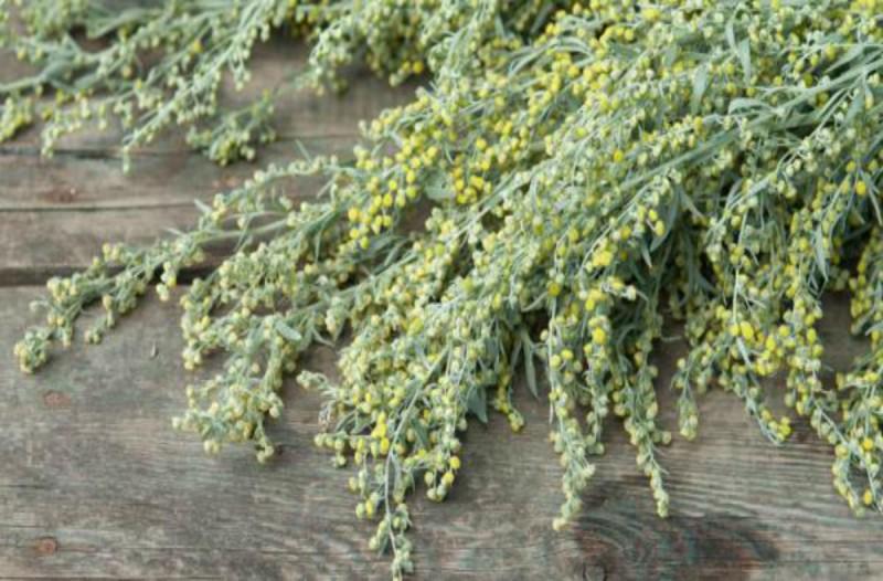 Το θαυματουργό φυτό που θα σας σώσει από την κατάθλιψη