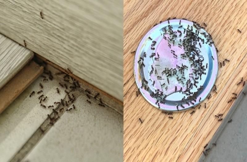 Σπιτική συνταγή με ξύδι που θα διώξει τα μυρμήγκια μια για πάντα - Θα σας λύσει τα χέρια