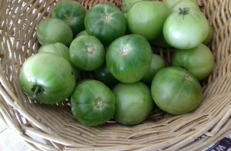 Πράσινη ντομάτα: Αυτές είναι οι ευεργετικές ιδιότητες που προσφέρει στον οργανισμό