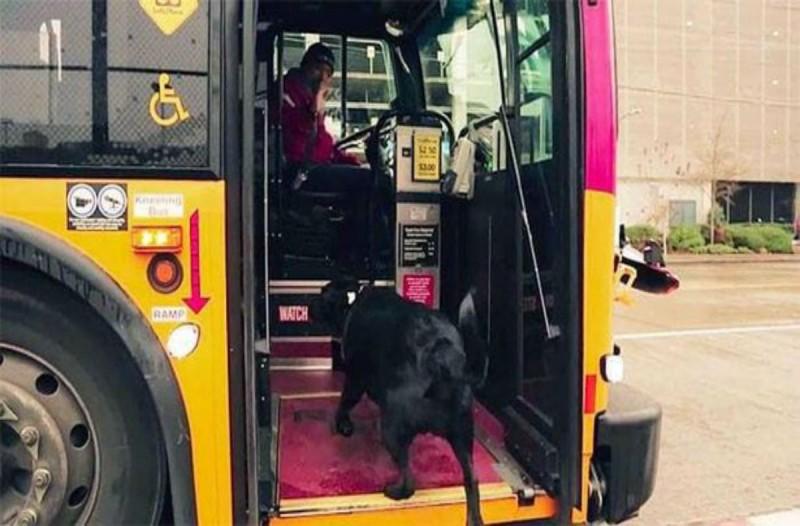 Αυτός ο σκύλος μπαίνει μόνος του σε ένα λεωφορείο - Αυτό που ακολουθεί θα σας αφήσει με το στόμα ανοιχτό!