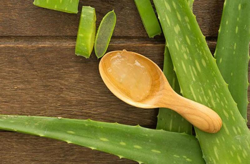 Αλόη βέρα: Το φυτό που κάνει θαύματα στο δέρμα σας