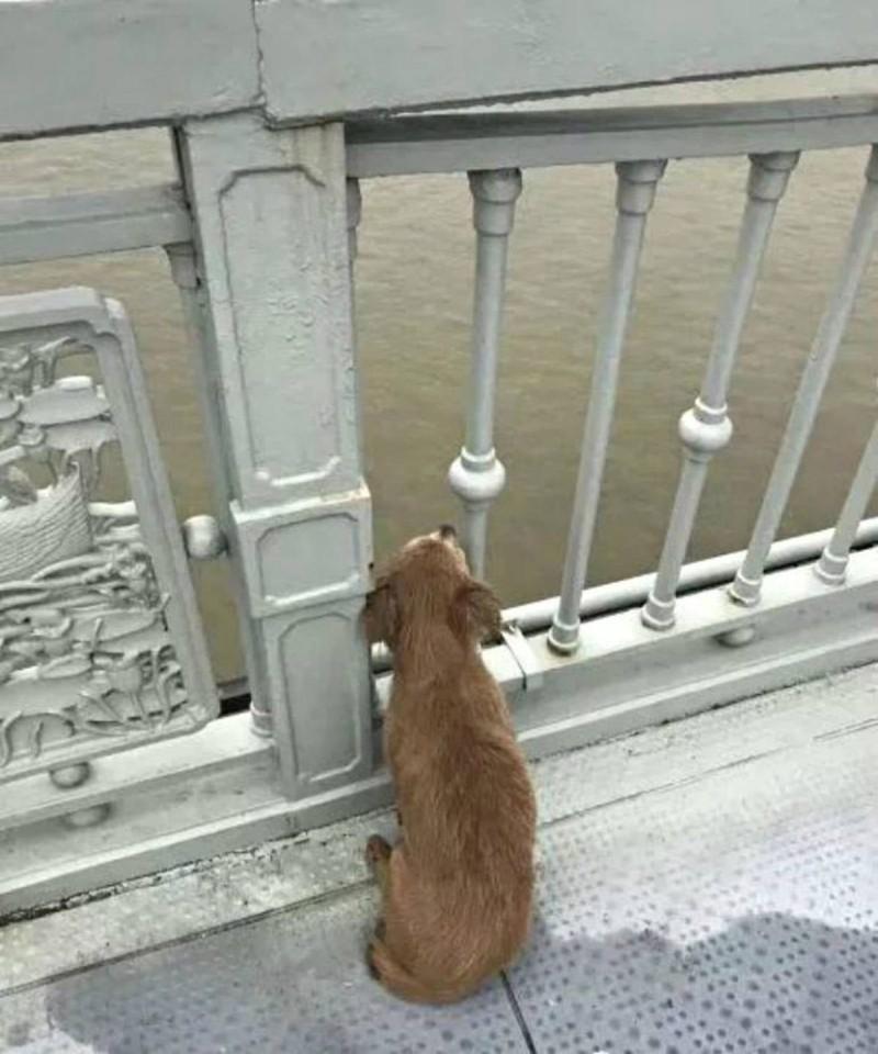 Σκύλος περίμενε 4 μέρες σε Γέφυρα