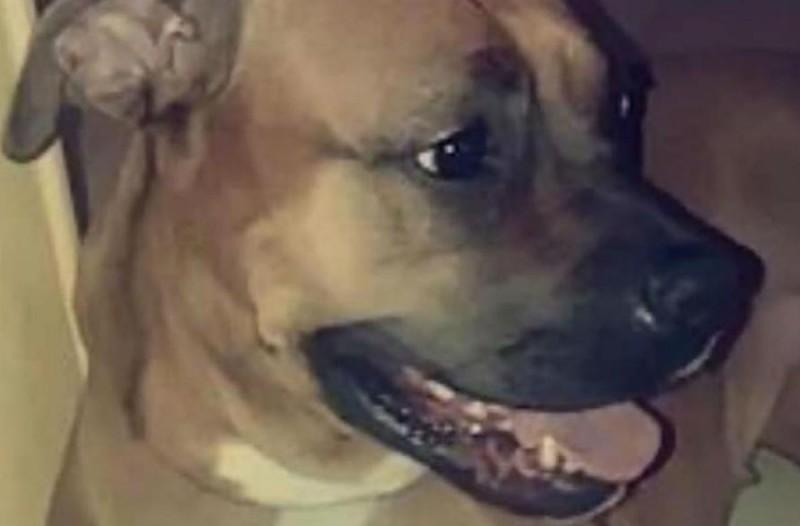 45χρονος μαχαίρωσε και έριξε από το μπαλκόνι τον σκύλο του