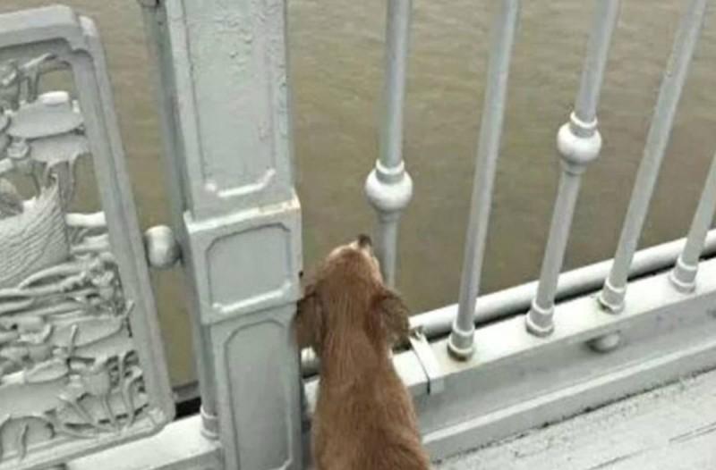 Σκύλος περίμενε 4 μέρες σε γέφυρα για να δει ξανά το αφεντικό του που αυτοκτόνησε πέφτοντας