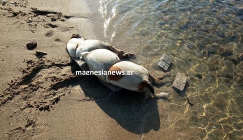 Έδεσαν σκύλο με πέτρες και τον πέταξαν στη θάλασσα