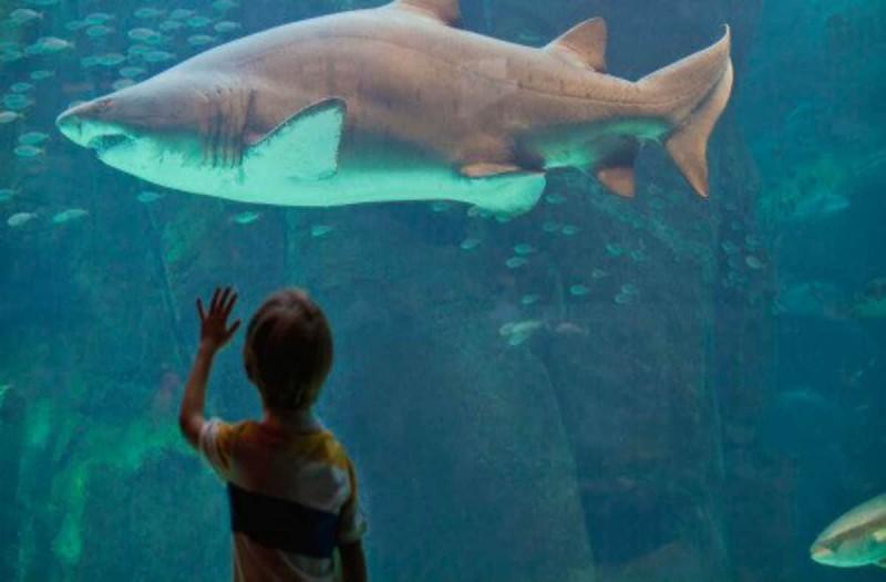Χτυπούσαν επίμονα το τζάμι ενός ενυδρείου που ζούσε ένας καρχαρίας όταν ξαφνικά...