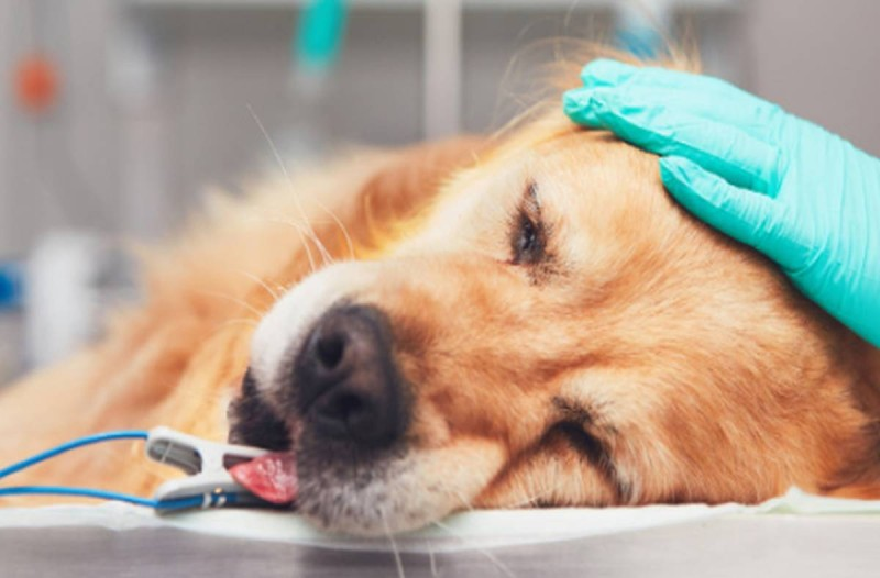 7+1 σημάδια που δείχνουν ότι ο σκύλος σας είναι μια ανάσα από τον θάνατο!