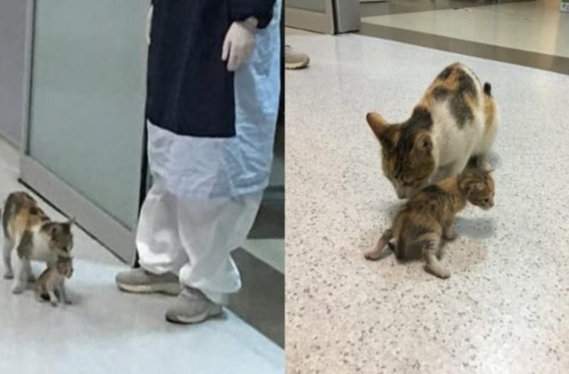 Αδέσποτη γάτα πήγε το άρρωστο μωρό της στο νοσοκομείο - Η εικόνα ραγίζει καρδιές