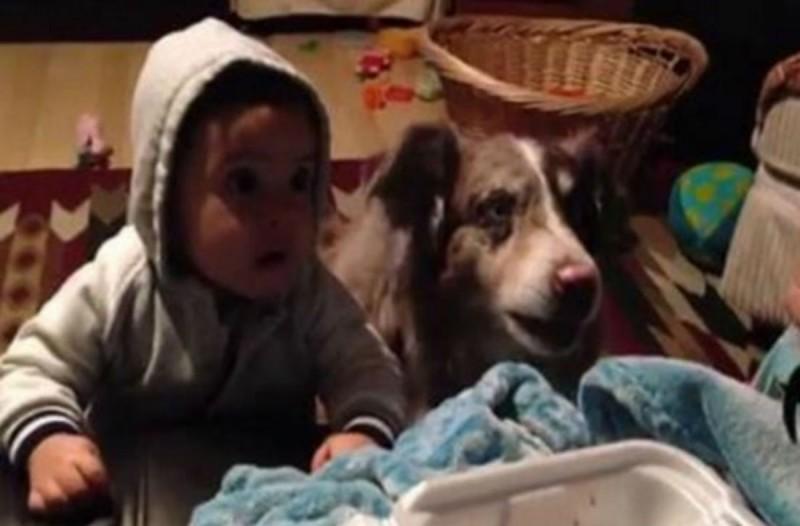 Μητέρα προσπαθεί να μάθει στο μωράκι της λεξούλες, αλλά... ο σκύλος άφησε τους πάντες άφωνους