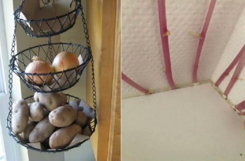 Απίστευτο - Ξέχασε τις πατάτες στο διαμέρισμα και έγινε περιβόλι