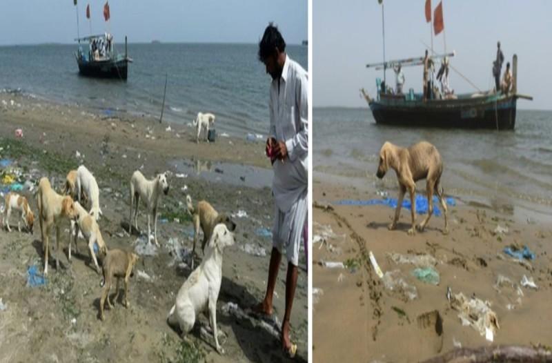 Το νησί με τα 35,000 παρατημένα σκυλιά που πεθαίνουν από την πείνα