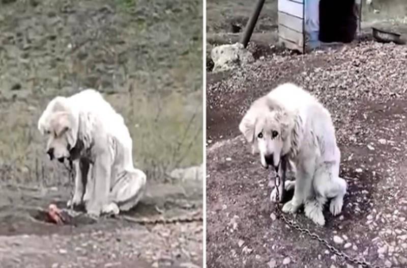 Εγκατέλειψαν ένα ηλικιωμένο σκυλί στο δρόμο δεμένο με βαριά αλυσίδα