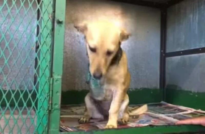 Οργή: Η οικογένεια αυτού του σκύλου έλεγε ότι είναι αηδιαστικός μετά το χτύπημα και τον παράτησε - Μετά από λίγες ημέρες...