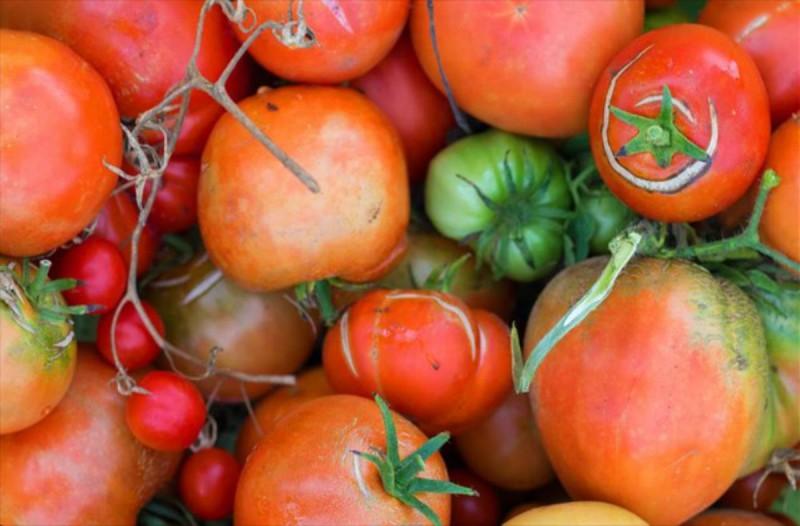 Έχετε παρατηρήσει ένα σκίσιμο στη ντομάτα σας; Αυτό σημαίνει ότι...