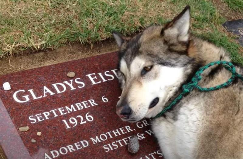 Σκύλος θρηνεί πάνω από τον τάφο της ιδιοκτήτριας του - Το βίντεο ανατριχιάζει