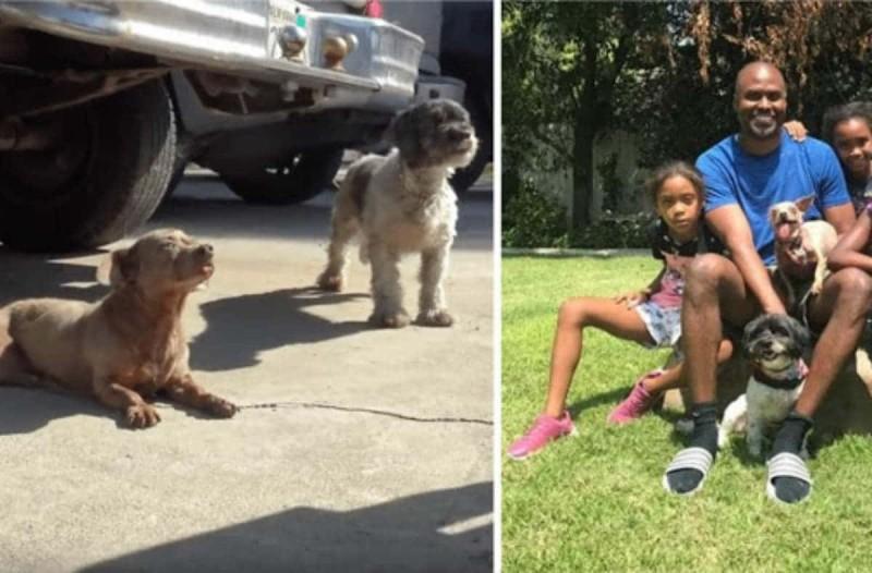 Σκύλος με όγκο εγκαταλείπεται μαζί με το φίλο του - Αυτό που κατέγραψε η κάμερα στη συνέχεια θα σας