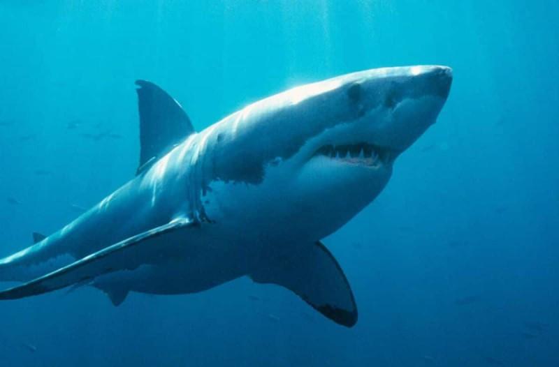 Καρχαρίας προσπαθούσε να φάει μια σαρδέλα όταν ξαφνικά κατασπάραξε τον...