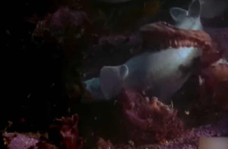 Επική μάχη: Καρχαρίας μάχεται με χταπόδι - Το βίντεο που ξεπερνά τις 4.000.000 προβολές