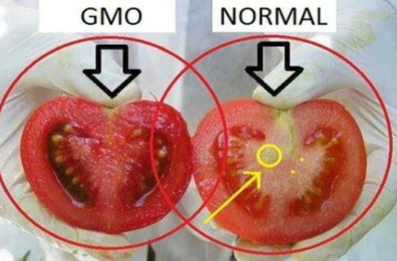 Τρώμε δηλητήρια: Έτσι θα ξεχωρίσετε τις γενικά μεταλλαγμένες ντομάτες