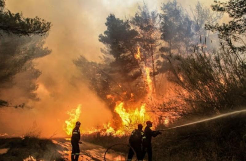 Φωτιά στη Μόβρη Δυτικής Αχαϊας