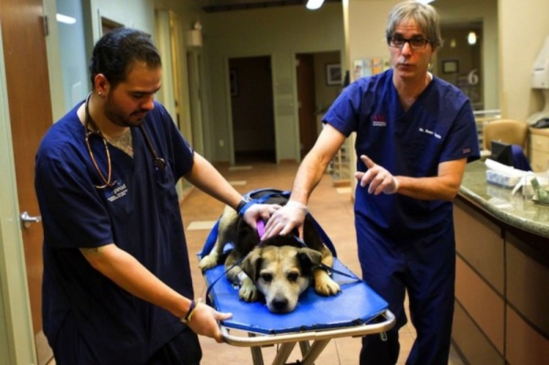 Ο Charlie μεταφέρετε στο κτηνιατρείο για περίθαλψη.