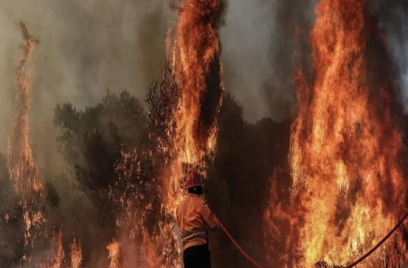 Φωτιά στα Λεχαινά Ηλείας