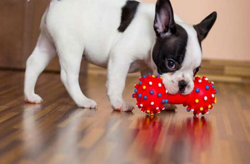 Έβαλε όλα τα παιχνίδια του σκύλου σε ένα μπολ με μαγειρική σόδα - Μίση ώρα μετά είδε πως...