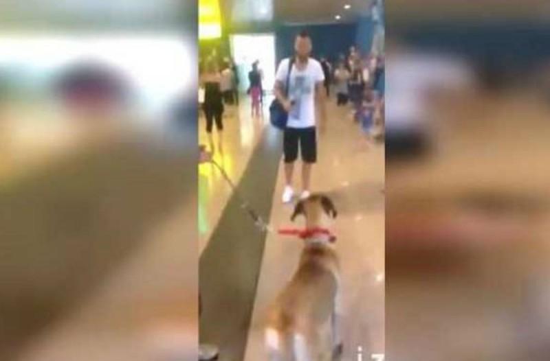 Δεν είχε δει τον σκύλο του για 3 ολόκληρα χρόνια - Δείτε την στιγμή που τον ξανασυναντά (Video)