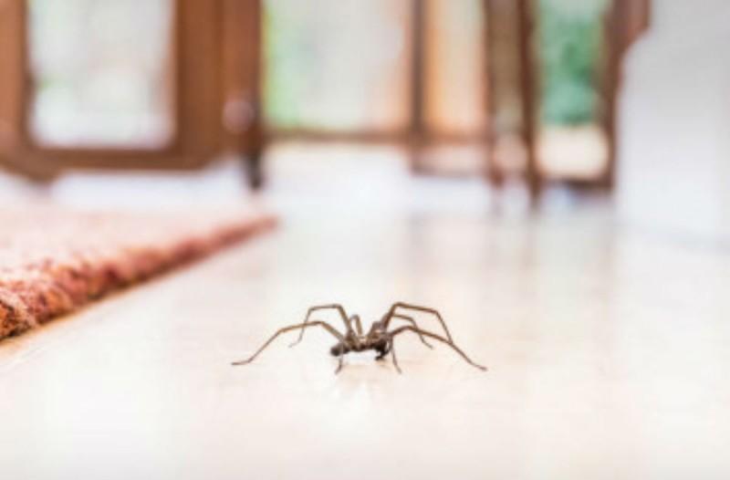Να γιατί δεν πρέπει να σκοτώνετε τις αράχνες στο σπίτι σας