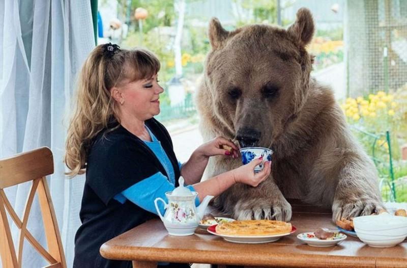 Αρκούδα ζει σε σπίτι και τρώει γιαούρτι