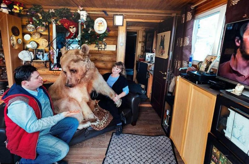 Αρκούδα ζει σε σπίτι και βλέπει τηλεόραση
