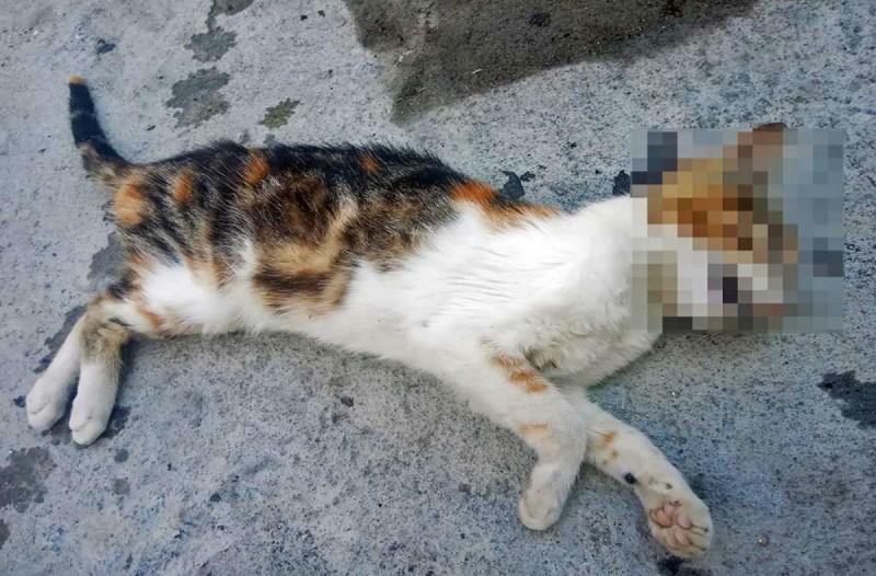 Νέα κτηνωδία στην Πάτρα: Μαχαίρωσαν οκτώ γάτες