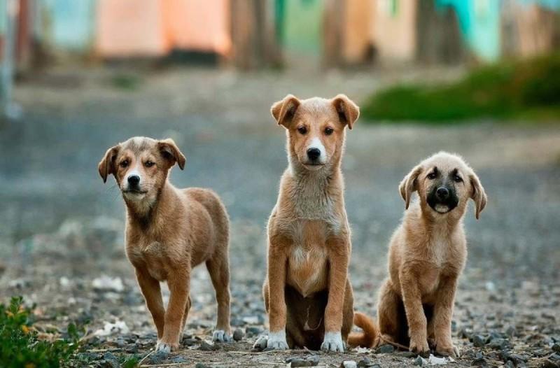 Κακοποίηση ζώων - Εγκύκλιος