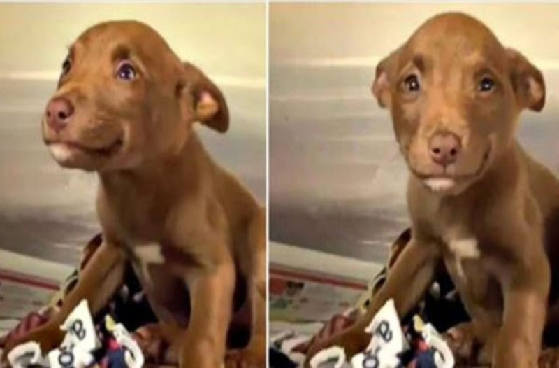 Το γλυκό σκυλάκι δε σταματά να χαμογελά - Ο λόγος θα σας αφήσει άφωνους (video)