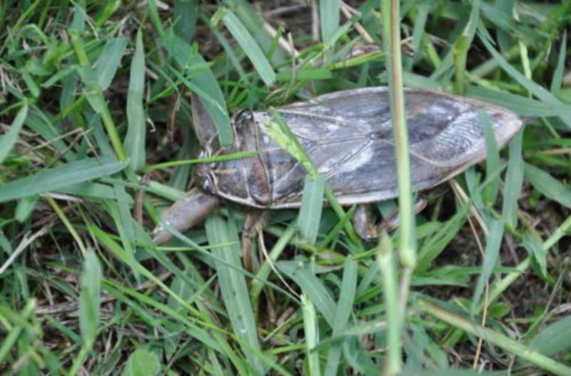 Νόμιζαν πως ήταν απλά μια κατσαρίδα - Έπαθαν σοκ όταν έμαθαν ότι αντιμετώπισαν ένα…