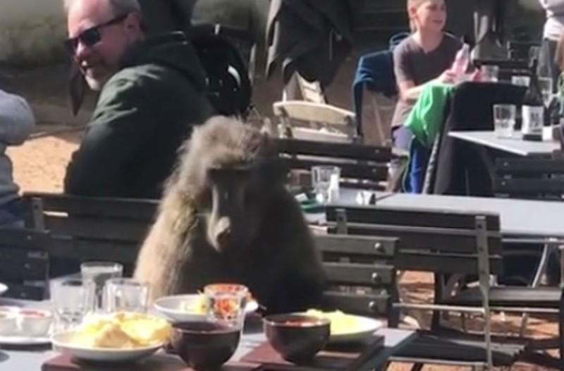 Έτρωγαν μακαρόνια σε ένα εστιατόριο όταν εμφανίστηκε ένας μπαμπουίνος - Αυτό που ακολούθησε δεν έχει προηγούμενο