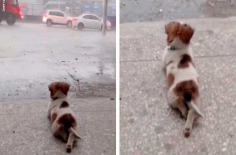 Το μικρό σκυλί κλέβει τις καρδιές των ανθρώπων όταν...(video)
