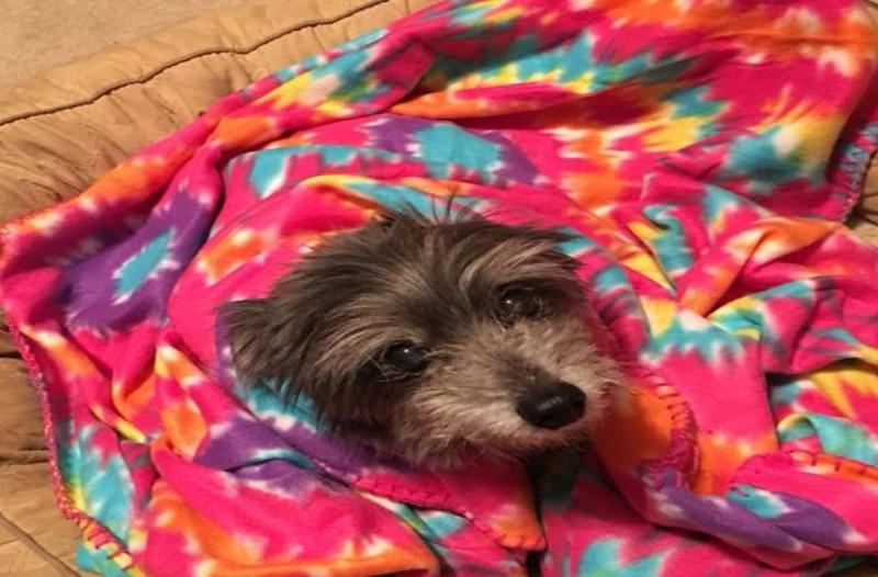Σκυλίτσα σκεπασμένη σε κουβέρτα