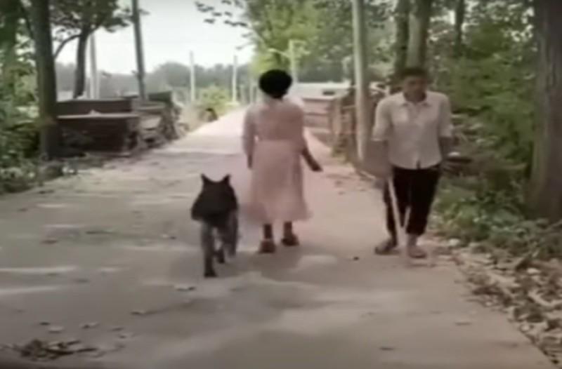 Ο σκύλος γυρίζει για να αφαιρέσει ένα εμπόδιο για έναν τυφλό άντρα και... (video)